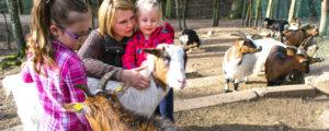 Kindergeburtstag Wildpark Saarbrücken
