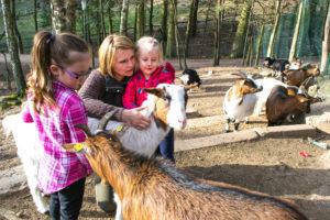 Ziegenkuscheln in der Wildpark-Akademie Wildpark Saarbrücken