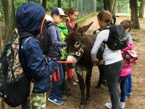 Esel-Trekking Wildpark Saarbrücken
